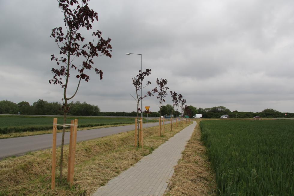 6 tys. drzew wmieście igminie