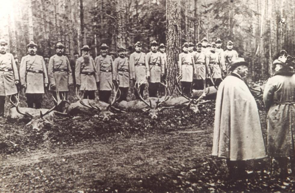 W Puszczy Osiecznickiej